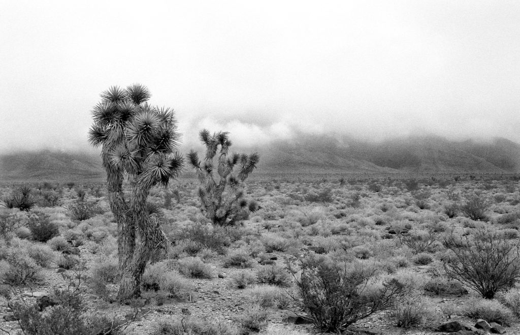 Joshua Trees - Somewhere on US 93, Nevada - 1997
