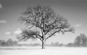 Delaware Park Winter Tree - Buffalo, New York - 1999